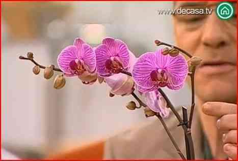 decorar con orquídeas