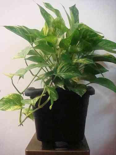 Plantas decoración
