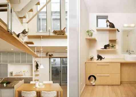 casa con gatos