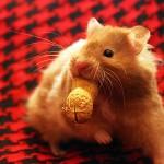 ratoncito comiendo un cacahuete