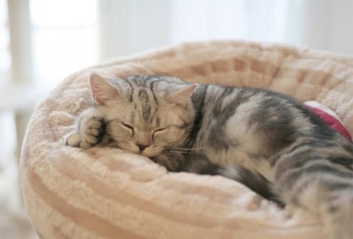un gatito en una cama blandita y de color claro